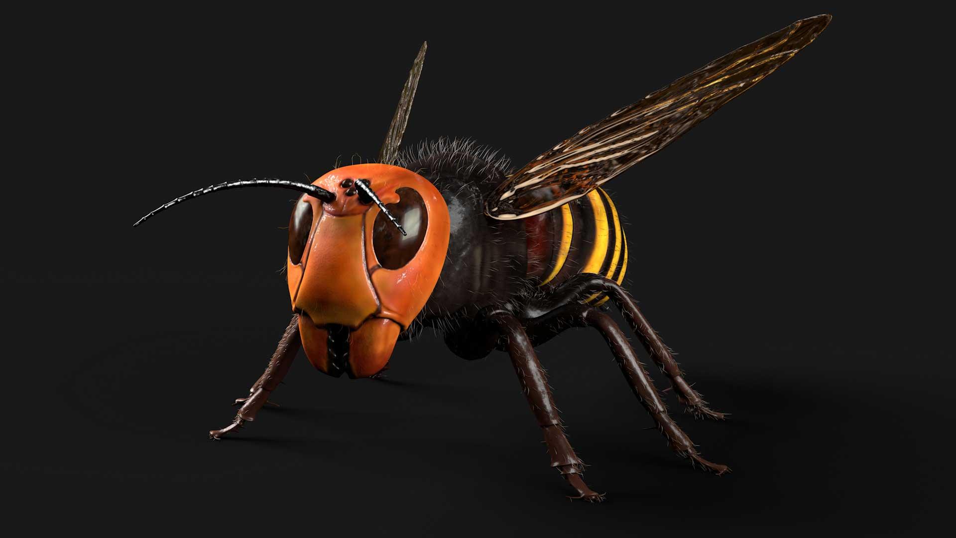 Pixelwish, Asian Hornet, 3D visual, front view, Aziatische reuzehoornaar, design, scary, bee